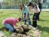 Generic-treeplanting.jpg