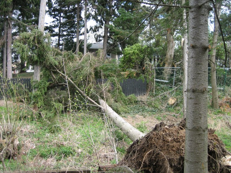 Fence Damaged by Fallen Tree