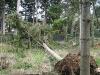 Fence Damaged by Fallen Tree