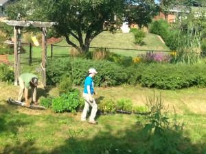Planting a riparian buffer